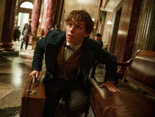 Image for Fantastic Beasts and Where to Find Them}