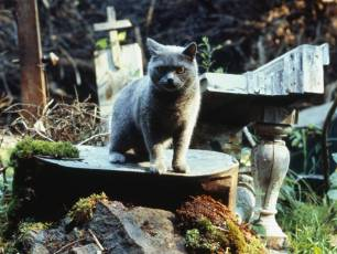 Image for Pet Sematary}