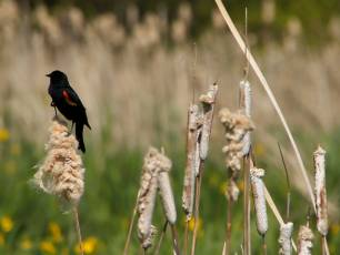 Image for Tales of the Dundee Wetlands}